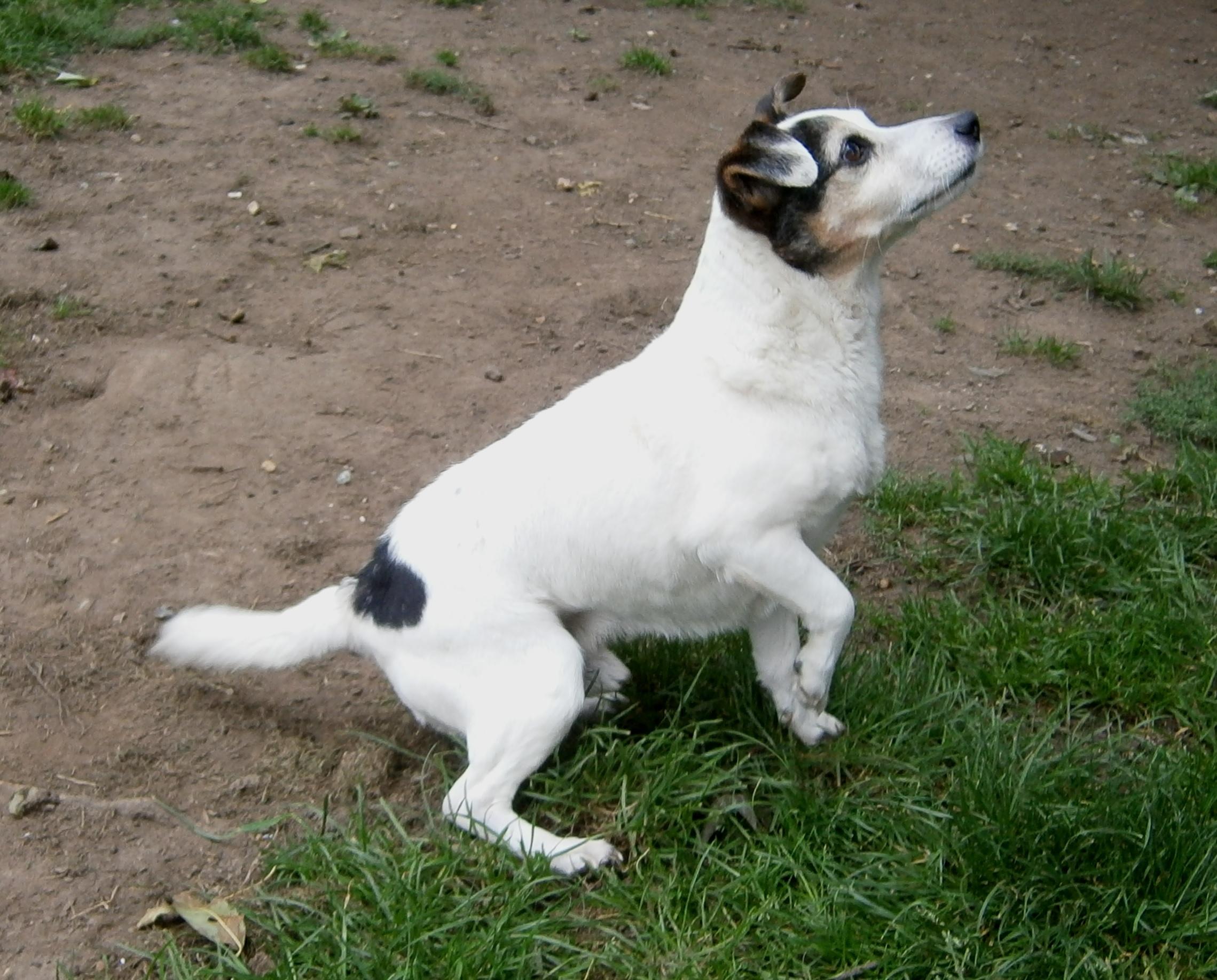 Dogs For Good Bertie