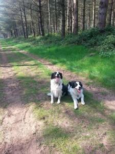 Flossie & Taffy