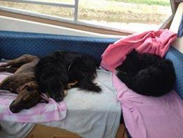 Suzie, Joey & Barney