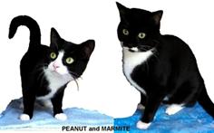 Peanut & Marmite