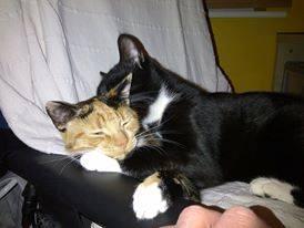 Freddie & Gingy