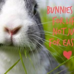 Bunnies for life not just Easter