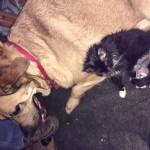 Lobby with her foster friend.  Her broken leg needed external fixation.