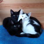 Kittens Sept 15