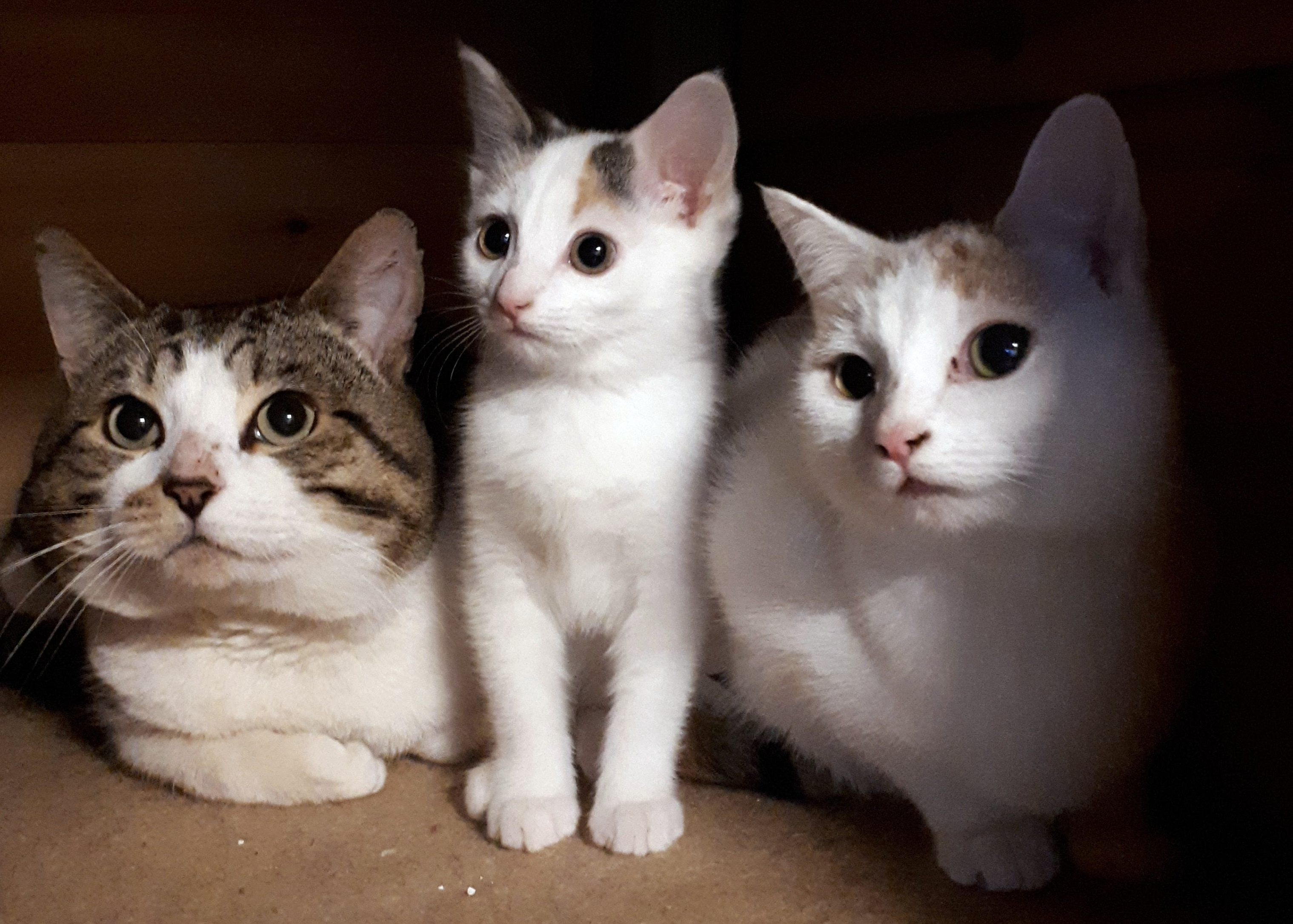 CATS FOR HOMING