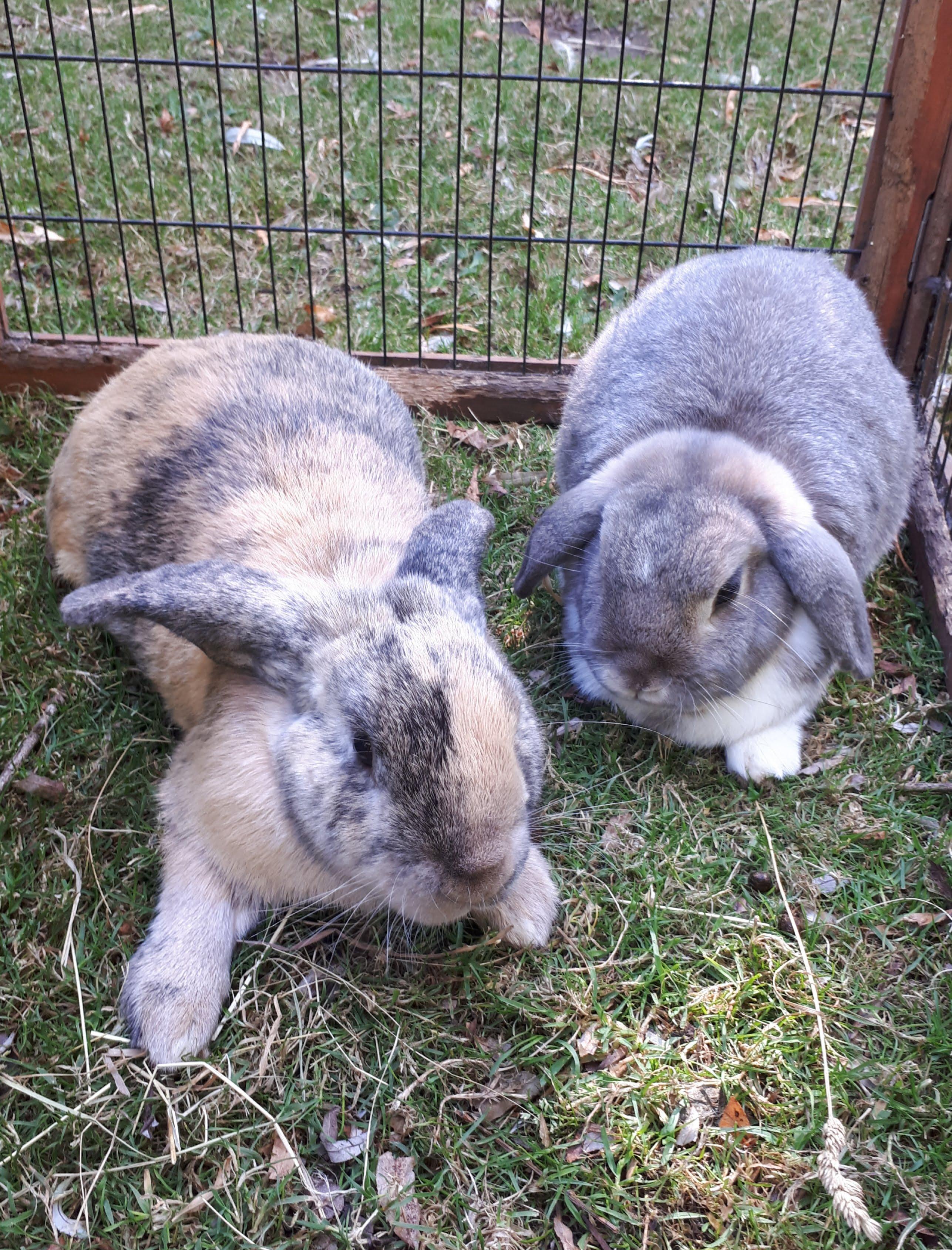Thumper & Flopsie