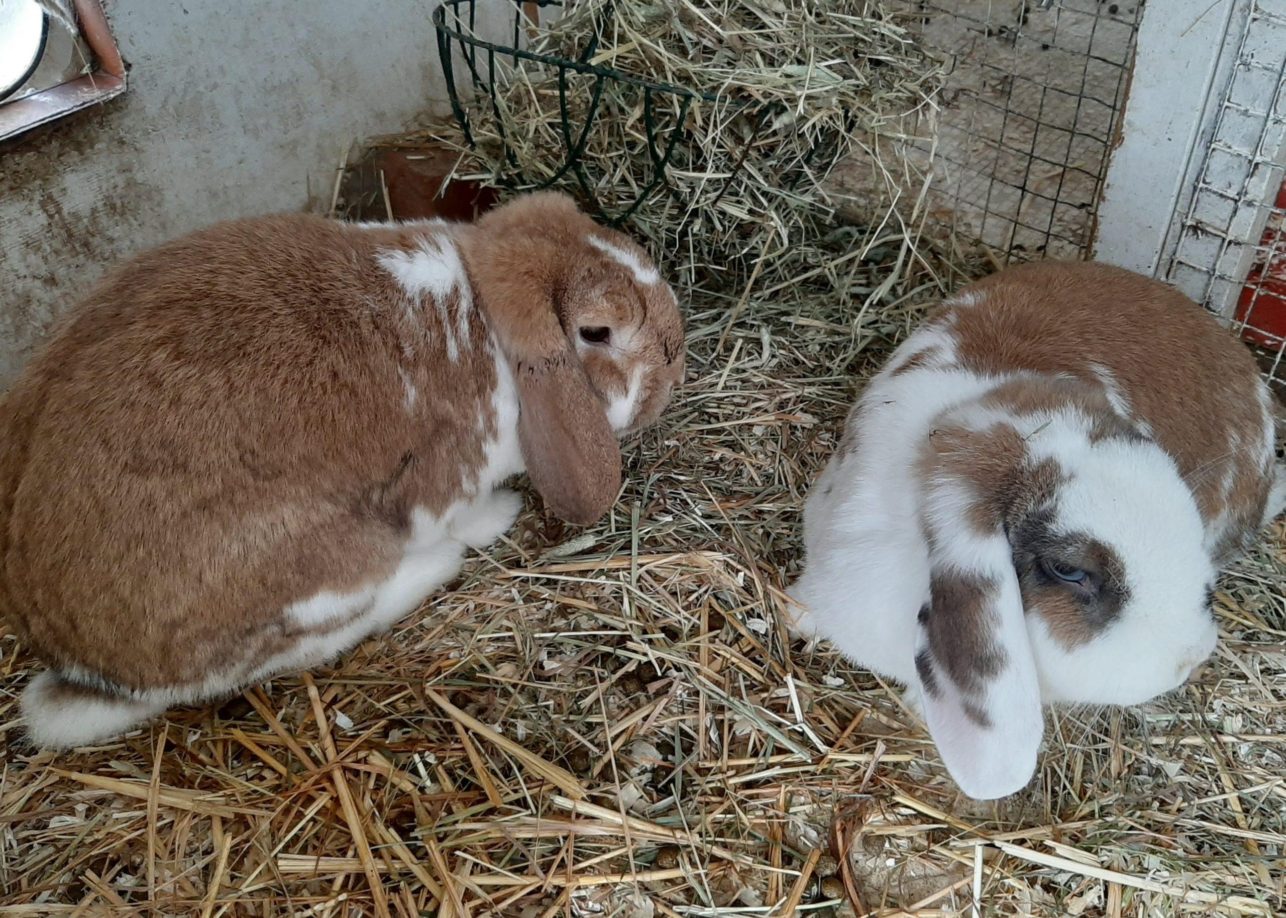 Pip & Annie