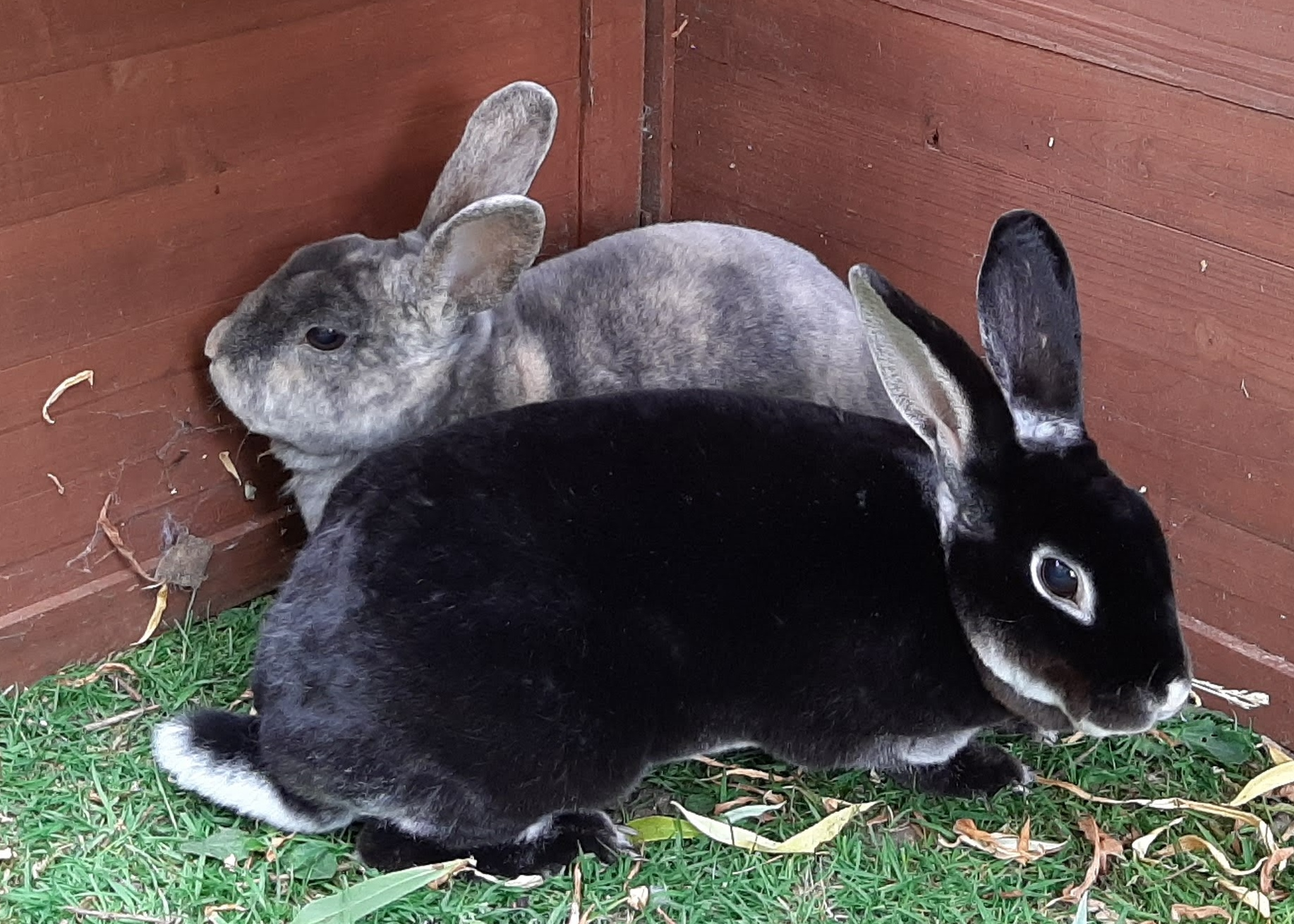 Herbert & Ebony