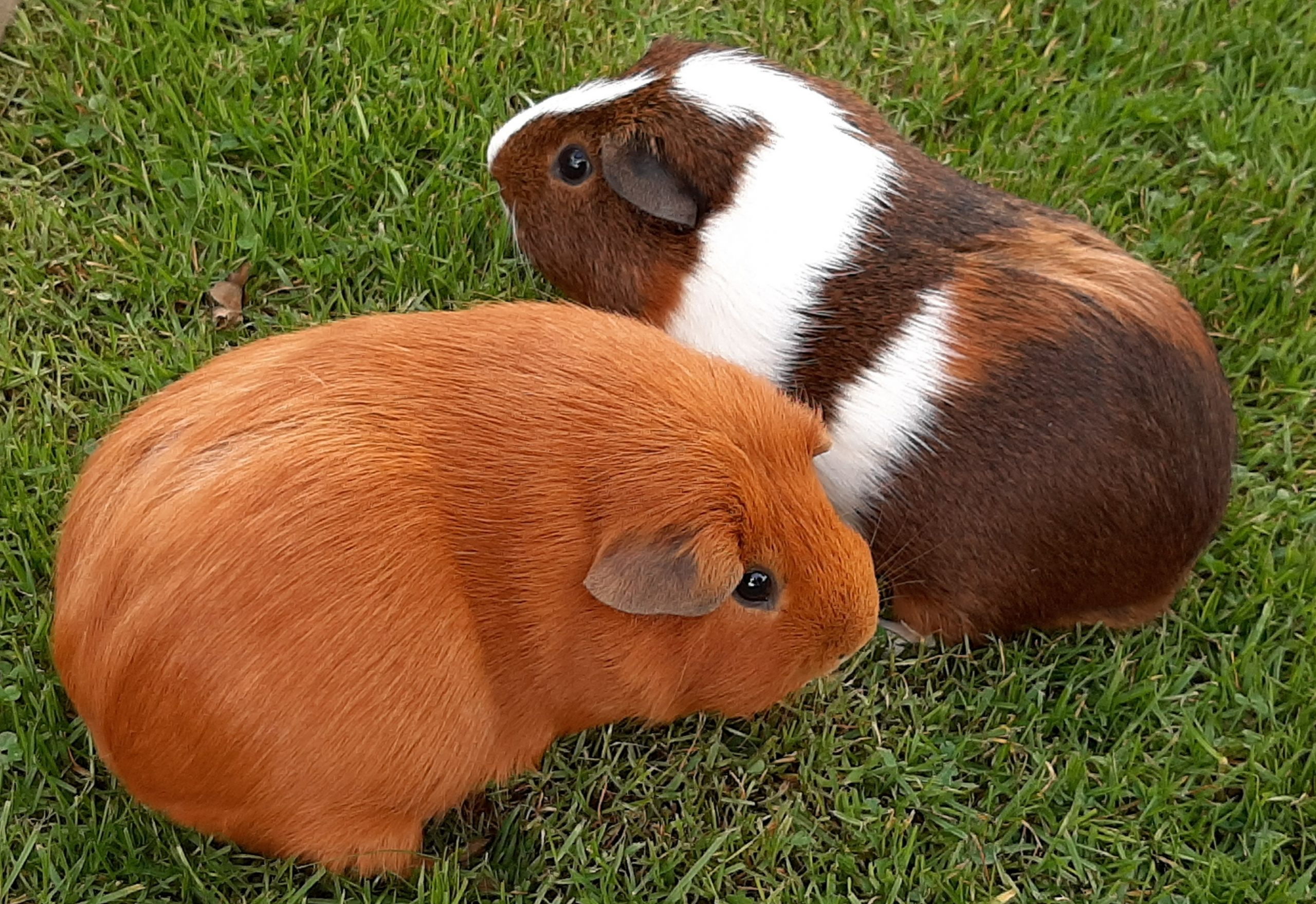 Ginger & Geoff