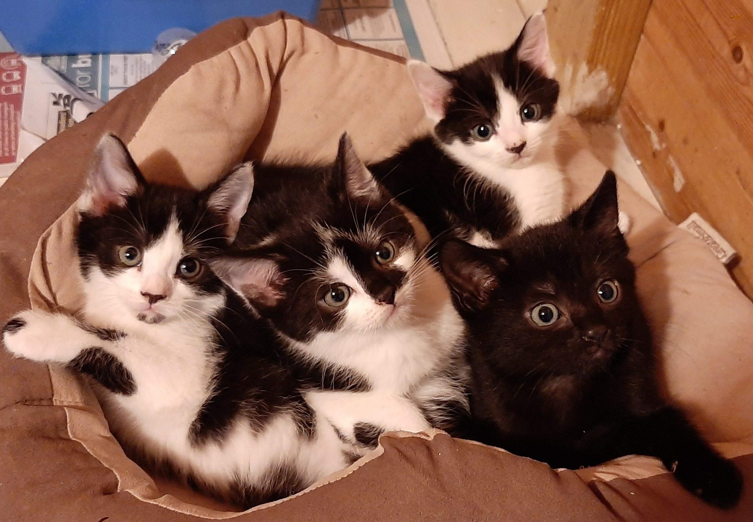 Belle's Kittens