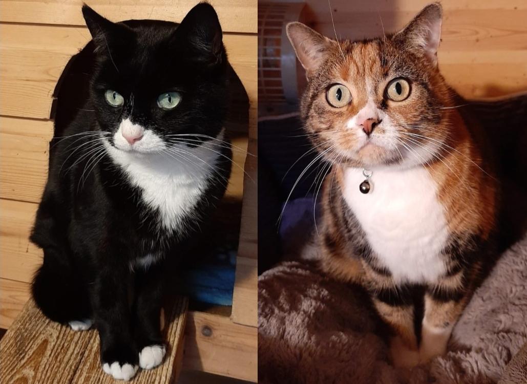 Oakley & Missy