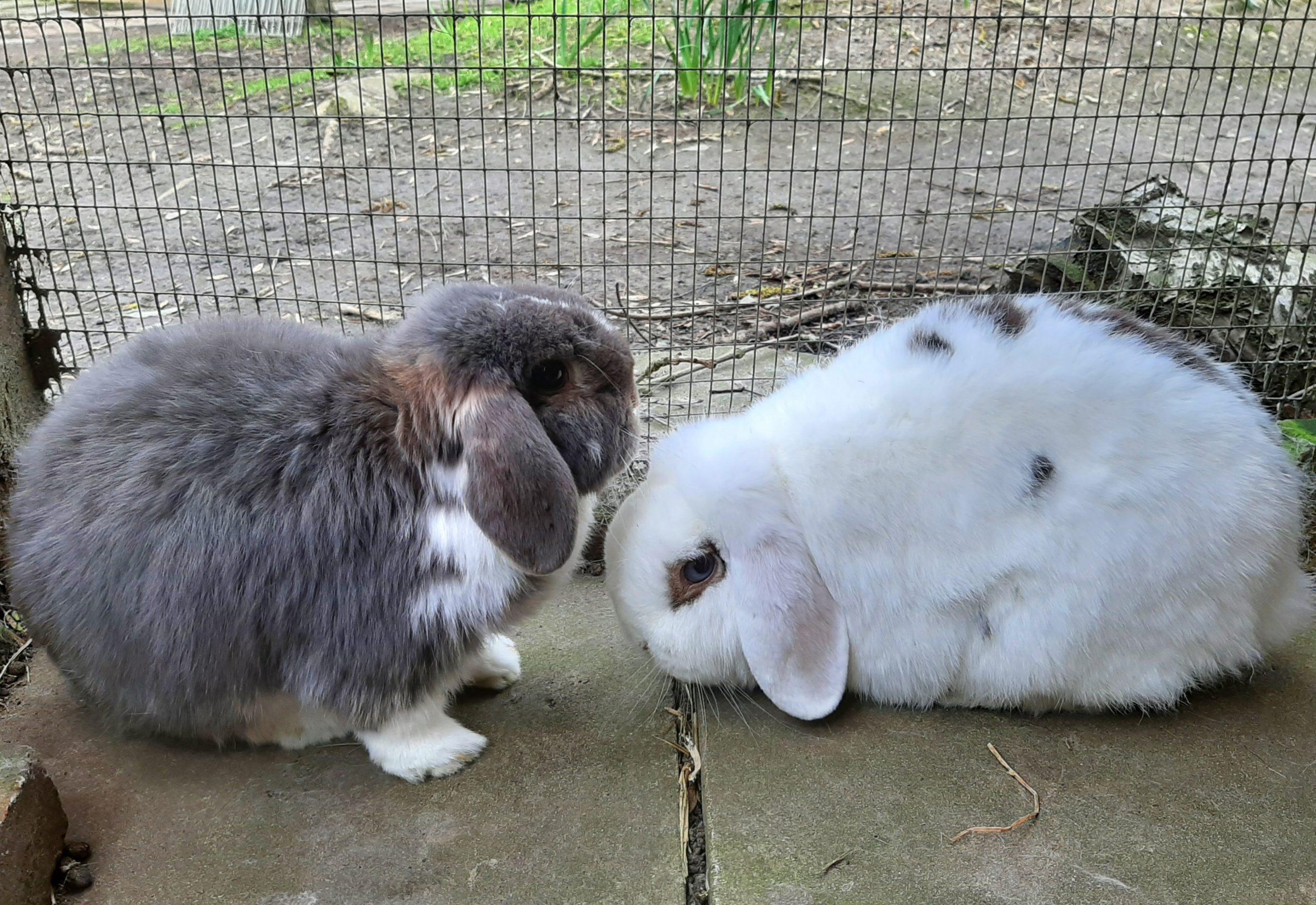 Jess & Charlie