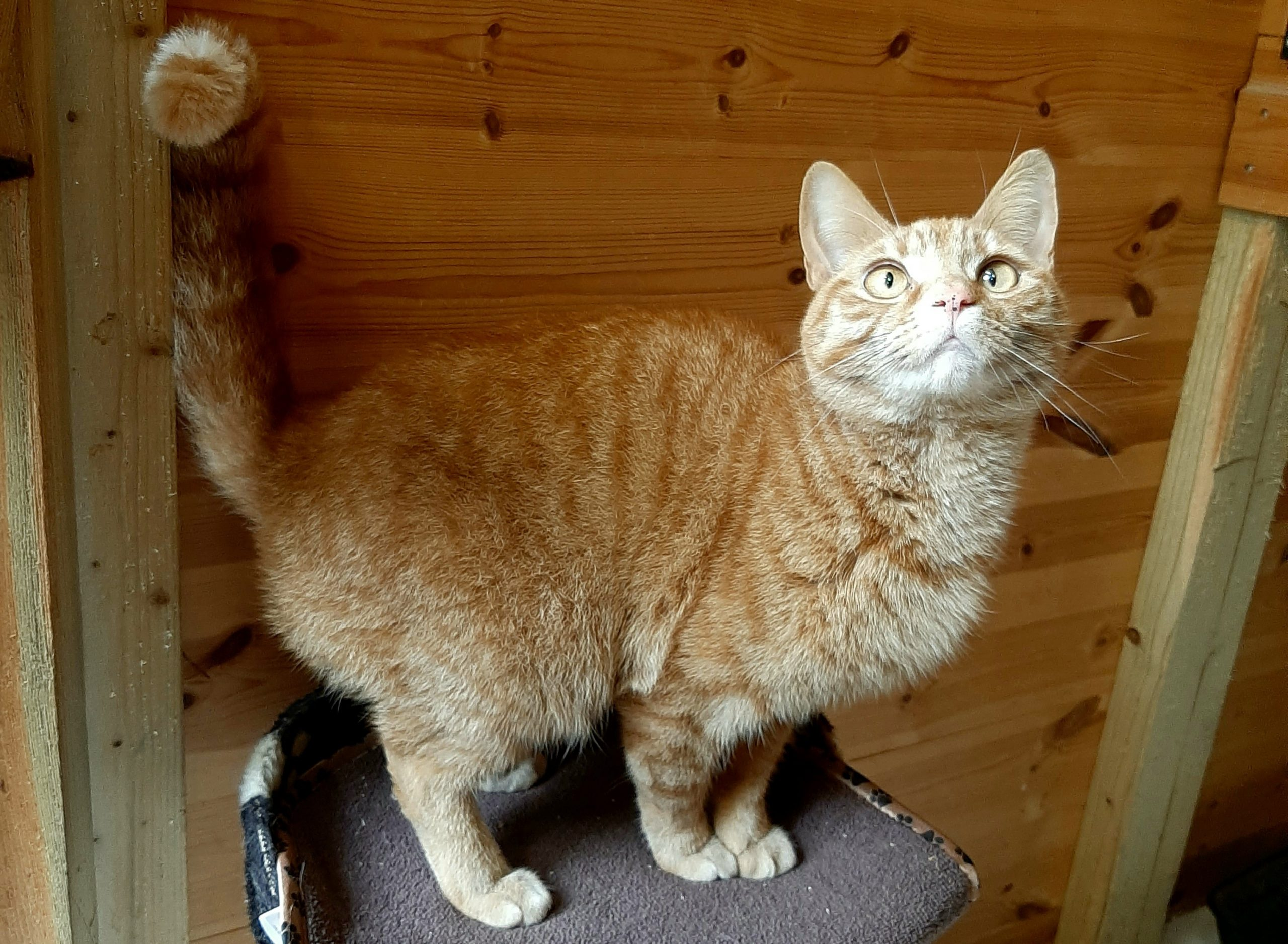 Marley (to be homed with Zizzie)